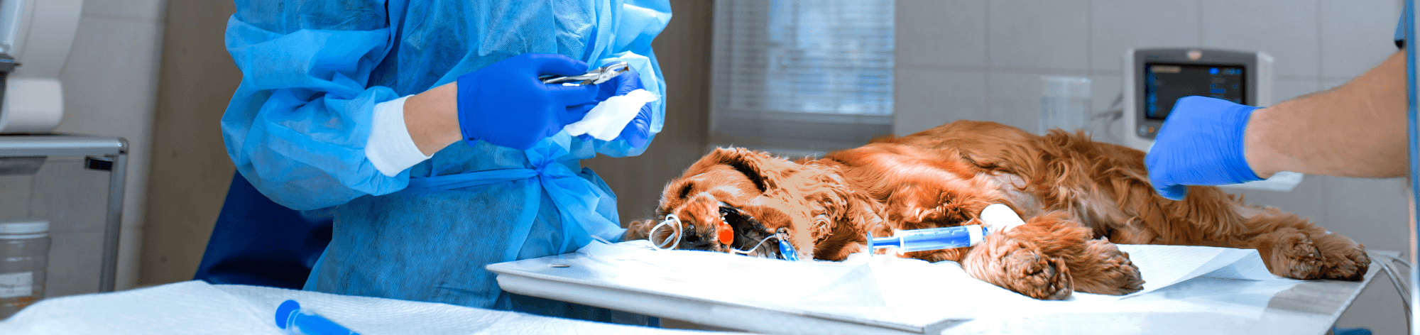 veterinary-researches